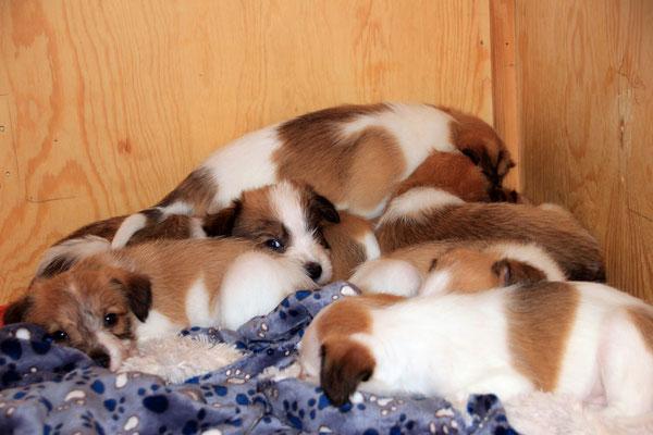 04.01.2019 - 42. Lebenstag: Cooper, Cookie, Chuko, Murmel, Onni & Cara