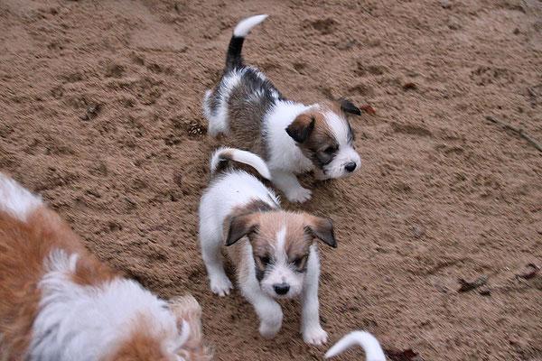 05.01.2019 - 43. Lebenstag: Chuko & Cookie (rechts)