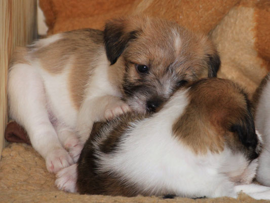 03.01.2019 - 41. Lebenstag: Cooper & Charlie