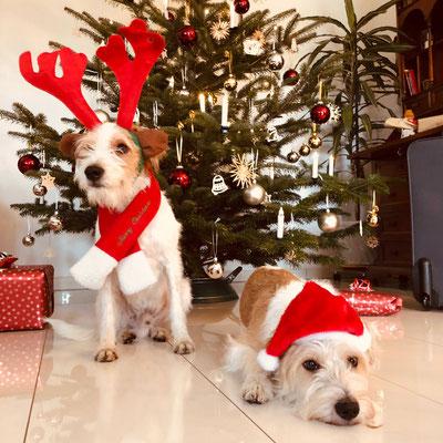 Kabou und Cataleya wünschen ein wunderschönes 1. Weihnachtsfest!