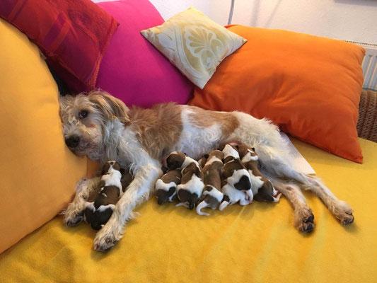 29.11.2018 - Aila & die C's - von links: Cookie, darunter Murmel, Cooper, Chuko, Onni, Charlie, darunter Cara & Carlo