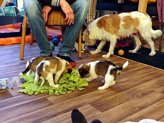 Captain Murmel, Cooper & Cookie suchen Leckerli im Schnüffelteppich.