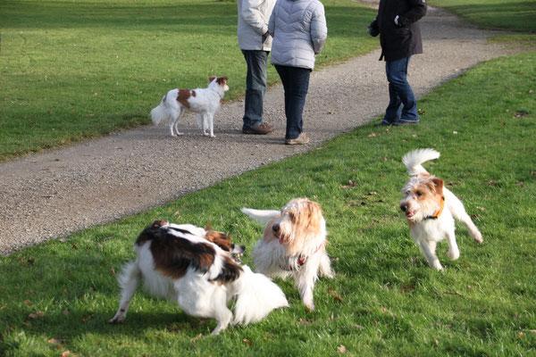 Cylie, Lucky, Benny & Bo