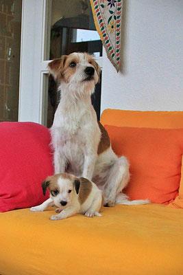 Kabou & Cara (Welpe 6)