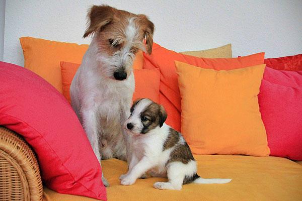 Kabou & Charlie (Welpe 4)