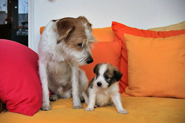 Kabou & Cooper (Welpe 1)