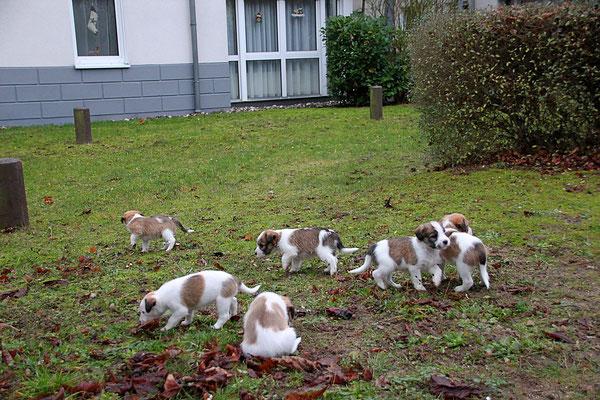 Murmel, Cara, Chuko, Cookie, Charlie & Carlo