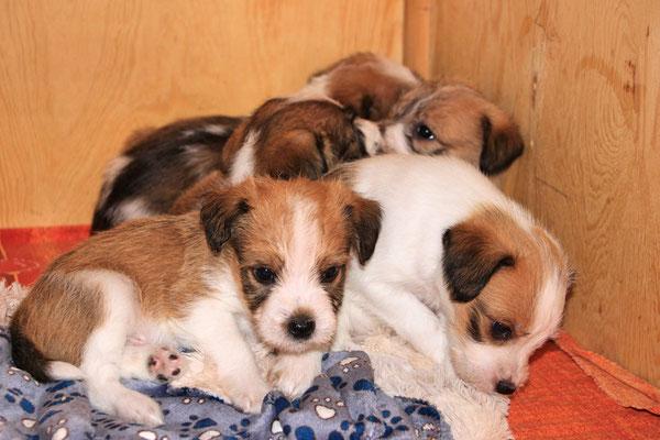 Murmel & Cara (Cookie, Charlie & Cooper)