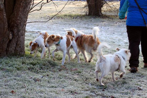 Biela, Kabou, Benny & Bille