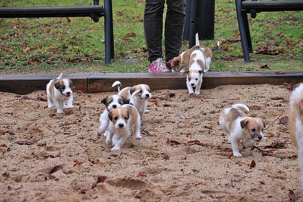 Charlie, Cookie, Carlo, Chuko, Cara, Murmel & Cooper