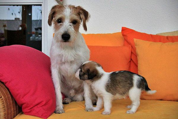 Kabou & Cookie (Welpe 5)