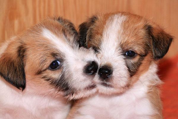 Chuko & Murmel