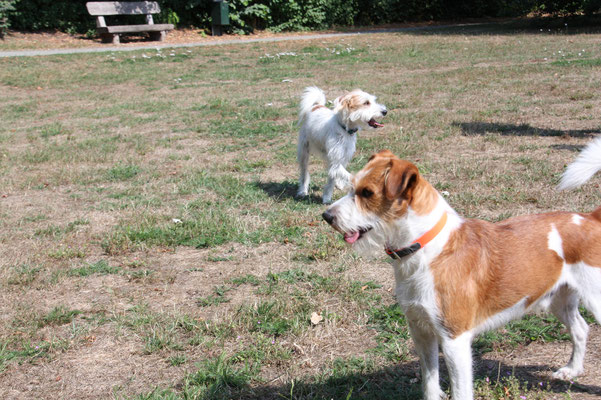 Ruby vom Huvenhoop & Anton vom Rieth Teich