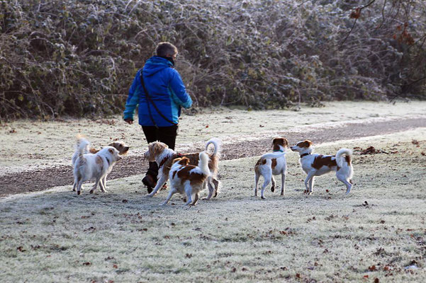 Bille, Nika, Benny, Akira, Kabou & Biela