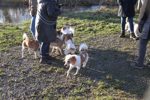 Anton, Lucky, Cataleya, Nika, Bo & Karlie