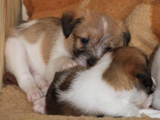 03.01.2019 - 41. Lebenstag: Cooper kuschelt mit seiner Schwester Charlie.