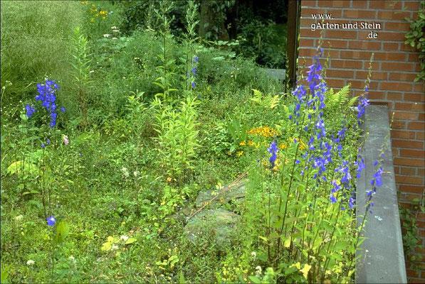 Blumenwiese auf dem Dach - Gartengestaltung Bremen