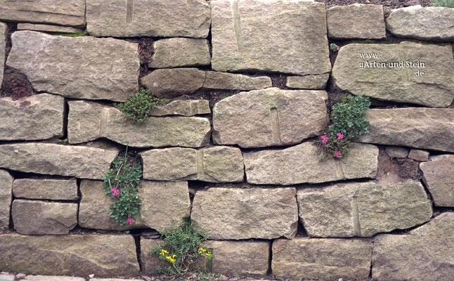 Beplanzte Trockenmauer