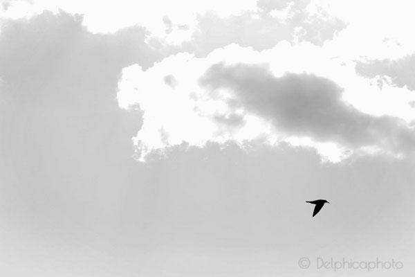 Delphicaphoto - Elements