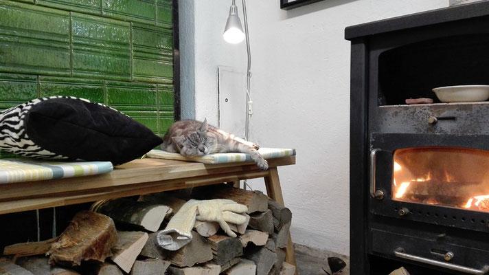 Katze Sue relaxt zwischen den Öfen / Cat Sue relaxes between the stoves © Juliane Leitner 2016