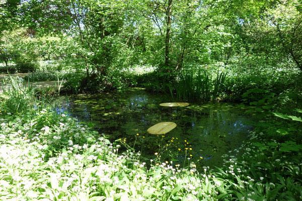 Blätter im Teich 2020 © Markus Treml