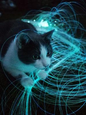 Test der Lichtinstallation Mykorriza mit Katze Else im Garten vor dem atelier lesa © photo by Juliane Leitner 2019