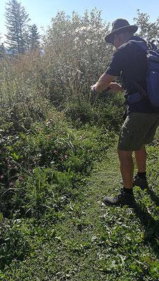 Auf der Foto Jagd nach dem Schwalbenschwanz Schmetterling