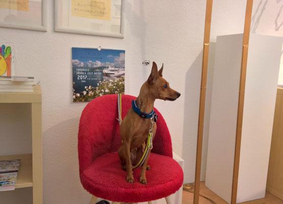 MEET THE ARTIST at the Exhibition VARIATION © Gerald Hochhauser 2016