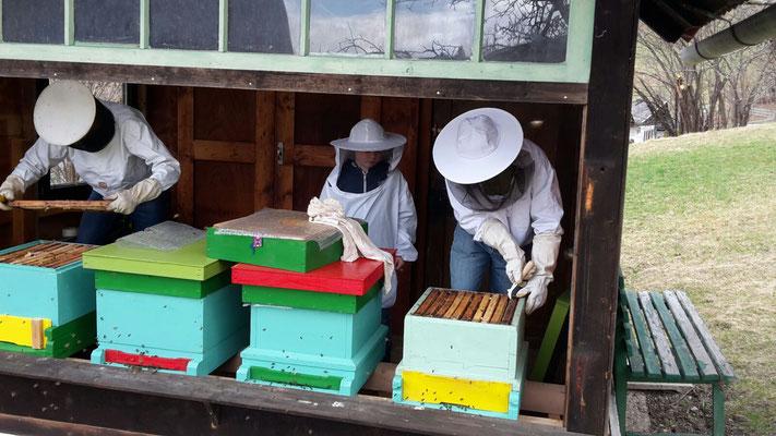Jungimker bei der praktischen Auswinterung von Bienenvölkern