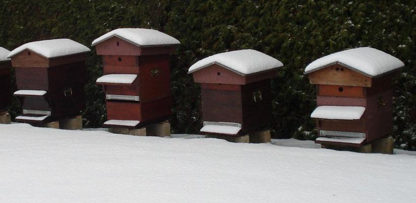 Les abeilles ne craignent pas le froid