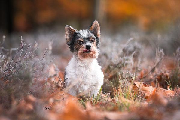 Herbstshooting Solingen - Smitty
