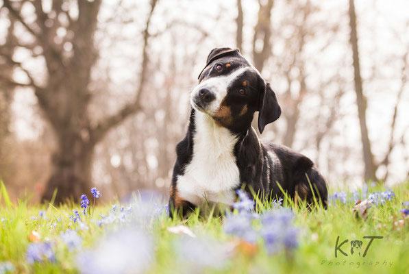 Week 15 - Springtime