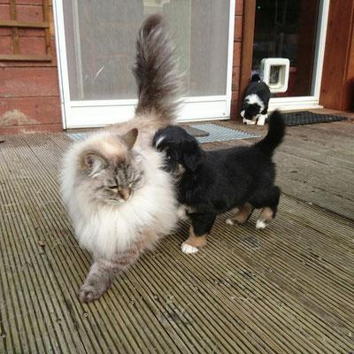 AIK mit Katze Darleen, 6 Wochen alt