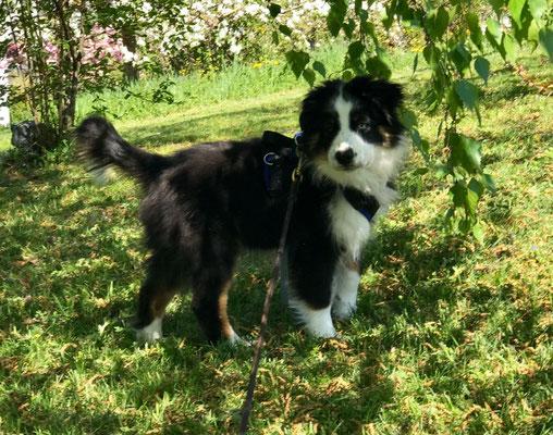 Lilou 4 Monate alt