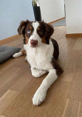 Ginger 6 Monate alt