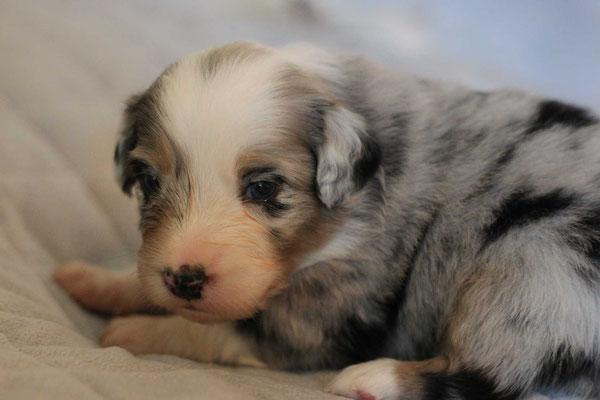 3 Wochen alt