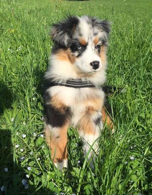 YUMA, 14 Wochen alt