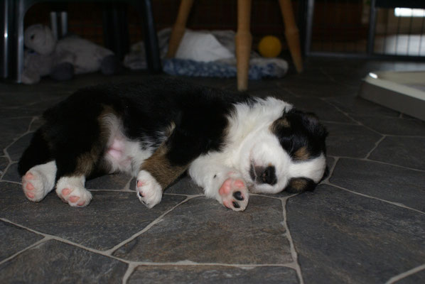 AKIRA 4,5 Wochen alt