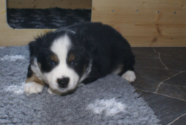 AKIRA 5,5 Wochen alt