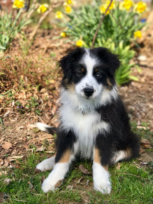 LILOU 3 Monate alt