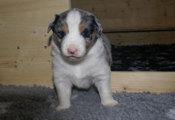 ARMANI 3 Wochen alt