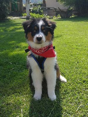 CIARA 4 Monate alt