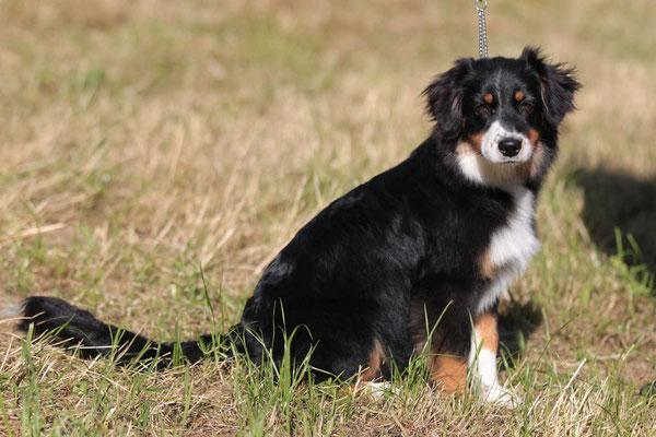 5.5 Mte alt, Hundeausstellung Aarau Juni 2018