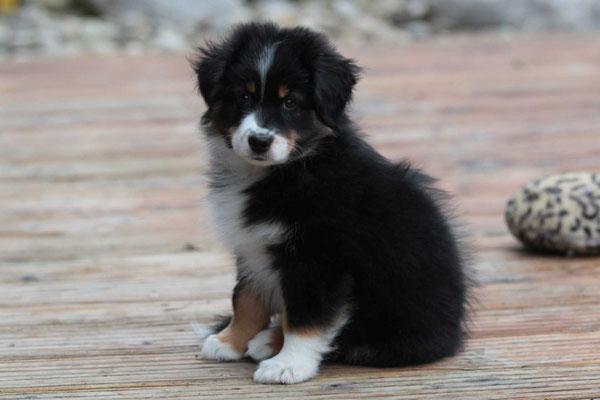 8 Wochen alt