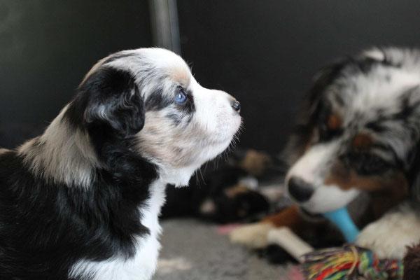 4 Wochen alt