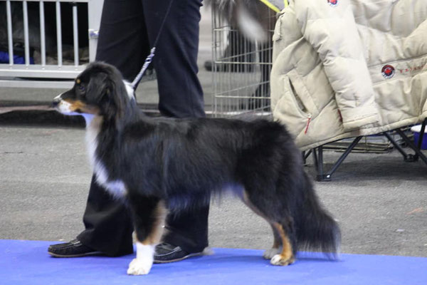 CHANEL an der Dogshow Genf 2018, 10 Monate alt