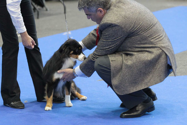 Dogshow Genf 2018
