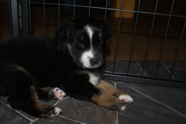 AIK 5,5 Wochen alt