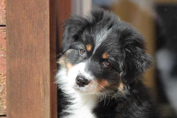 Chanel 11 Wochen alt