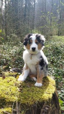 AMROCK 4 Monate alt